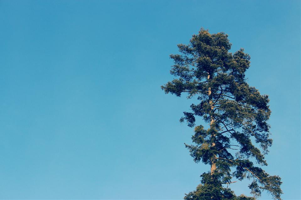 #negativespace #minimalism #keepitsimple #photography #tree #blue #sky