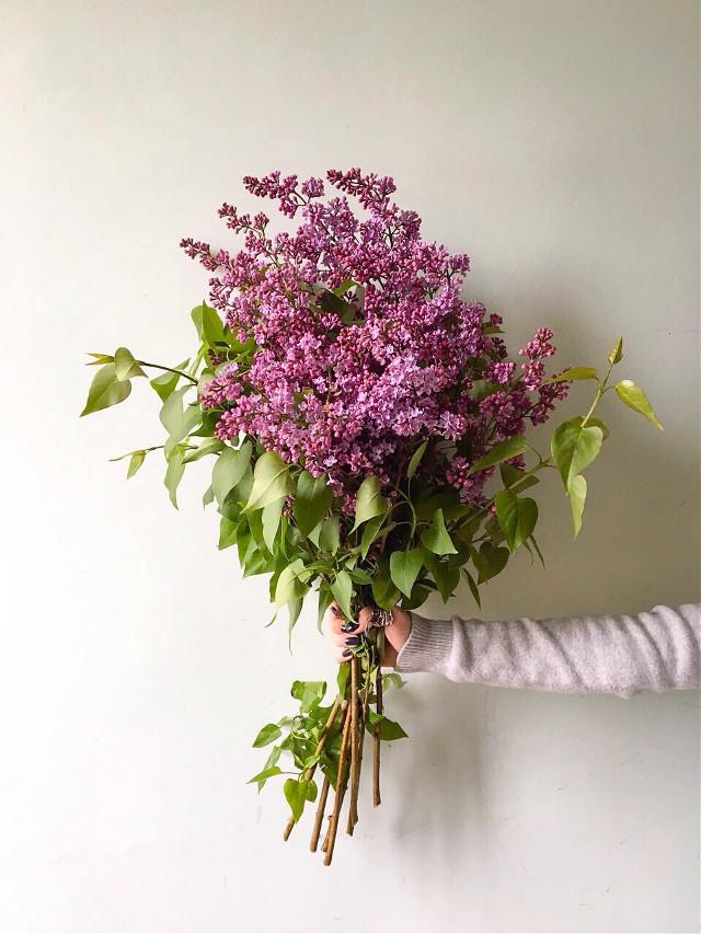 #FreeToEdit #simplicity #simplicityisbeauty #flowerpower #flower #art