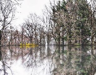 mirror trees nature reflections spring