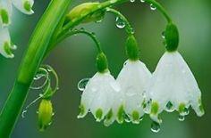 flowers morningdew