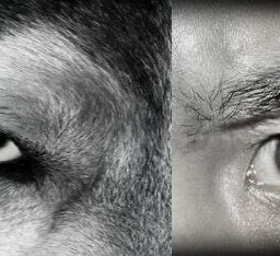 freetoedit hdr blur edited wolf