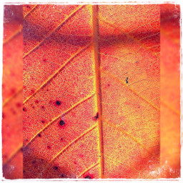 leaf leaveslovers leavesfalling