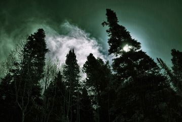 landscape nature art trees colortint freetoedit