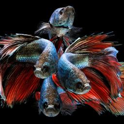 colorful colorsplash freetoedit hdr nature