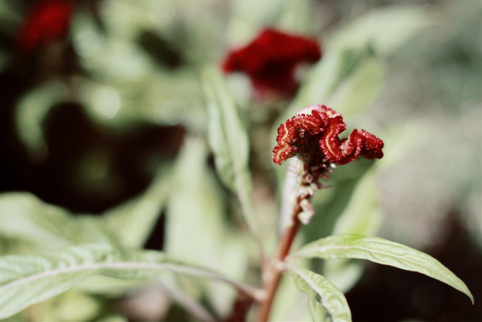 #nature  #flower  #red #seafoam
