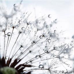 details moments rain dropsofrain freetoedit