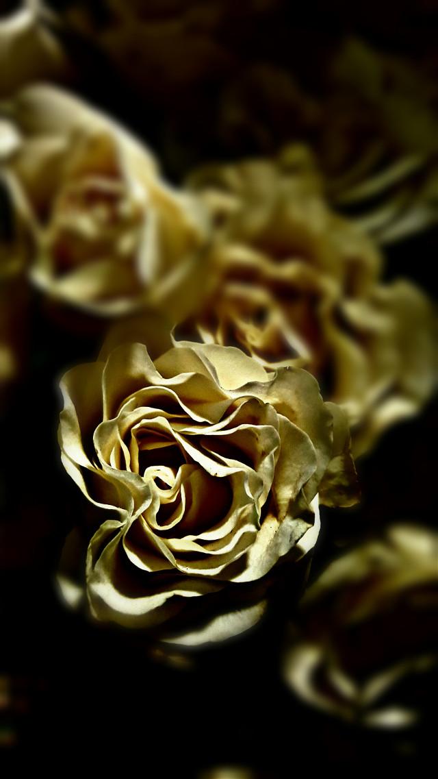 #texture #tiltshift #photography  #texture  #flower #flowers  #nature