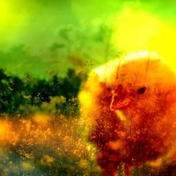 colorfilter doubleexpusure nature freetoedit