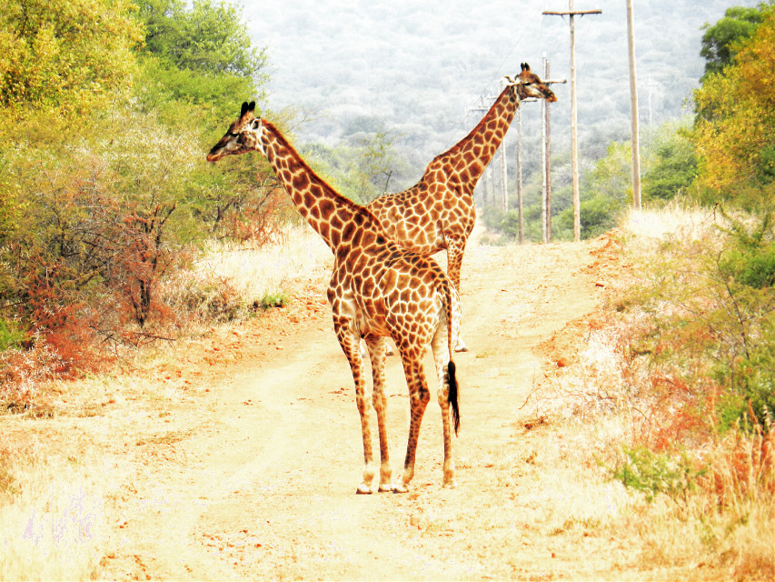 #nature #wild #animals