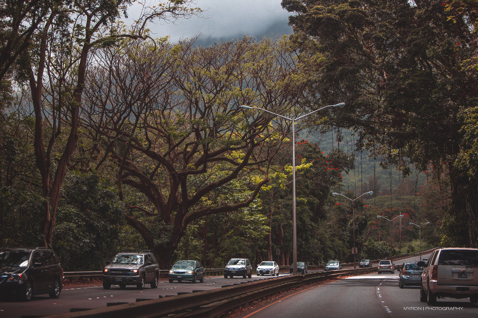 Oxygen filled roads.  #landscape #shooting #mood #cinematic #travel #photo #trees